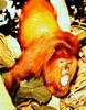 superbestia userpic