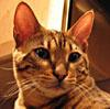 girlbunny userpic
