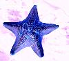 blue_starfish userpic