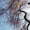 treese userpic