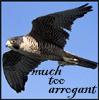 muchtooarrogant userpic