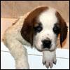 2002 Puppy