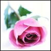 lynn userpic