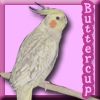 buttercupbirdy userpic