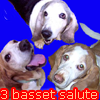 T: 3 Bassets