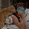 breakfast at tiffany's cat & mask