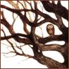 twilights_abode userpic