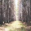treebytree userpic