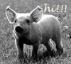 piggy hi!!!