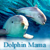 Dolphin Momma