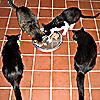entropy_house: Cat m