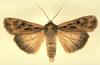 mothkiddo