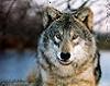 timberwolf2002 userpic