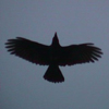 crowflying userpic