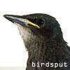 birdsput userpic