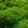 germinate userpic