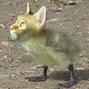 kotangens userpic