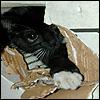 Pip destroys a box