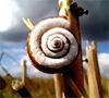 feggari_snail userpic