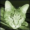 greengrimmy userpic