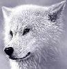 blizzardrose userpic