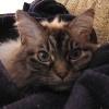 moodyduck userpic
