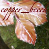 copper_beech