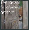 Rebecca: Random: grass is greener