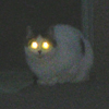 Cats glow in the Dark