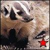 maoist_badger userpic