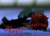 angenocturne userpic