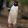 pinguinochica userpic