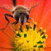bumbling_bee userpic