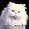 aristochatte userpic