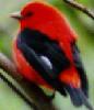 scarlets_letter userpic