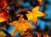lotii userpic