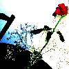 srafrnz userpic