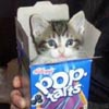 pop tart kitty!