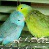 hinata_asura userpic
