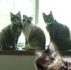 Dellingram cats