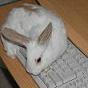whiterabbit37 userpic