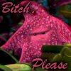 Peach - Bitch Please