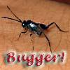 entropy_house: Bugger