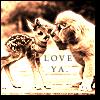 w0lfstar: baby deer love ya by proverb