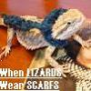 bearded_dragon userpic