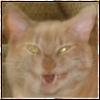 Hiss, Yawn, Demon Cat