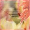 antiemma userpic