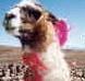mllepamplemoose userpic