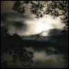 fog, *scenic -> trees -> fog