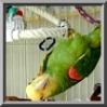 mysterparrot userpic